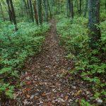 Greenland Creek Trail on the Ridge