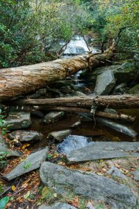 Scramble to Greenland Creek Falls