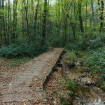 Boardwalk on the Little Green Trail
