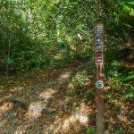 Little Green Trail at Mac's Gap