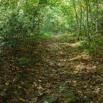 Macs Gap Trail Old Road