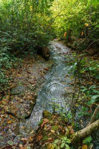 Stream and Macs Gap Trail