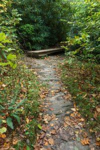 Footbridge on the Panthertown Valley Trail