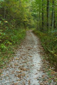 Panthertown Valley Trail Old Gravel Road