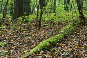 Mossy Log near the Panthertown Valley Trail
