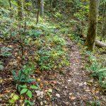 Ferns Along Elk Pen Trail