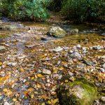 Creek Crossing on Elk Pen Trail