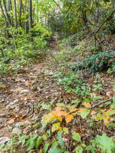 Little Andy Trail Climb