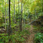 Upper Corner Rock Trail Cove