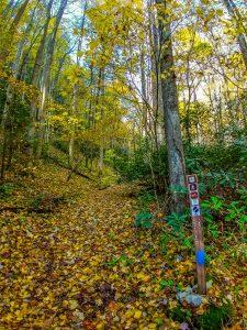 White Oak Trail Sign