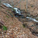 Crossing Barnett Branch