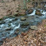 Buck Spring Trail Rock-Hop
