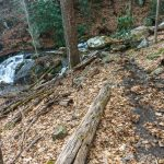 Log and Creek Crossing on the Buck Spring Trail