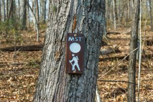 MST Sign on the Buck Spring Trail