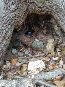 Fairy House in a Sourwood