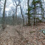 Ridge Trail Below Rock Knob