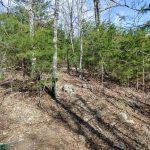 Jack Branch Trail thru Pines