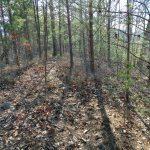 Ridgeline Portion of Jack Branch Trail