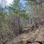 River Ridge Loop Trail thru Pines