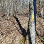 Start of the River Ridge Loop Trail