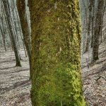 Mossy Tree Beside Max Patch Loop