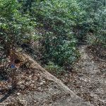 Cat Gap Bypass Trail