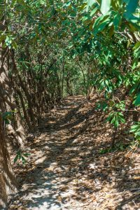 Rhododendron Tunnel on the Cat Gap Bypass Trail