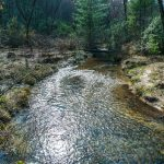 Grogan and Cedar Rock Creeks