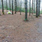 Campsite Under the White Pines