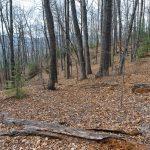 Open Forest on John Rock