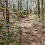 Start of the Buckwheat Knob Trail