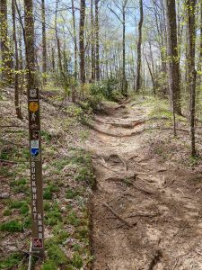 Start of the Buckwheat Knob Trail