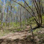 Start of the Club Gap Trail