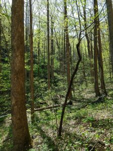 Forest Along Right Fork