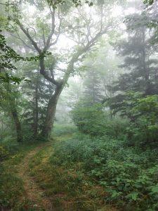 Fog on Brush Fence Ridge