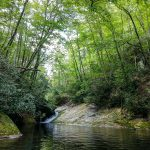 Trees Arching Over Swimming Hole