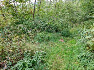 Laurel Gap and Bear Pen Trails