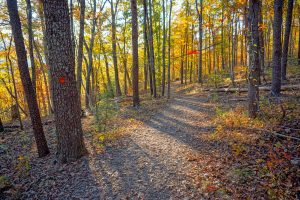 Blaze and Fall Colors on the Rumbling Bald Loop Trail