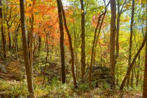 Brilliant Fall Color on the Rumbling Bald Loop Trail