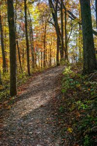 Fall Color on the Rumbling Bald Loop Trail
