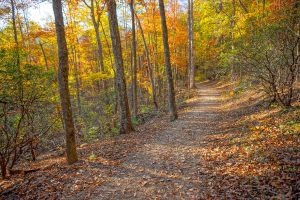 Forest of Fall Color on the Rumbling Bald Loop Trail