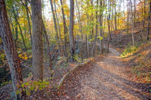 Fall Color near the Start of the Rumbling Bald Loop Trail
