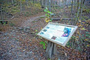 Salamander Sign on the Rumbling Bald Loop Trail