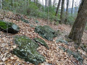 Rocky Reprieve on the Stomping Knob Trail