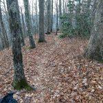 Path on Stomping Knob