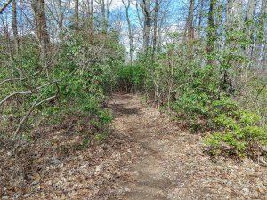 Easy Stretch of Buckwheat Knob Trail