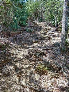 Steep Section of the Buckwheat Knob Trail