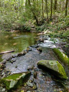Armstrong Creek Crossing 1