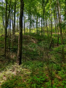 Open Forest on the Armstrong Creek Trail