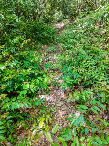 Armstrong Creek Trail Overgrown